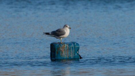 Műanyag tenger
